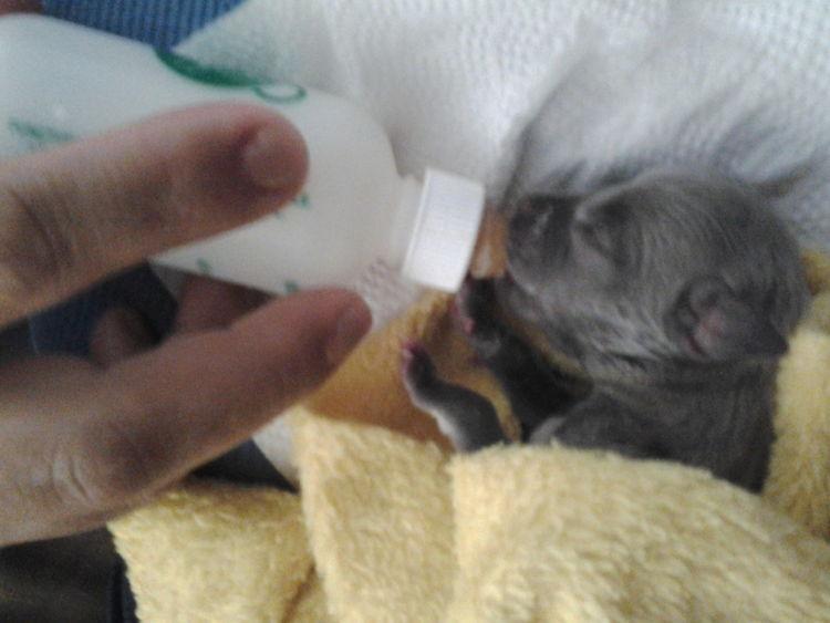 my baby dog .. I wilk always miss you Bella R.I.P RIP :( Pitbull Babydog