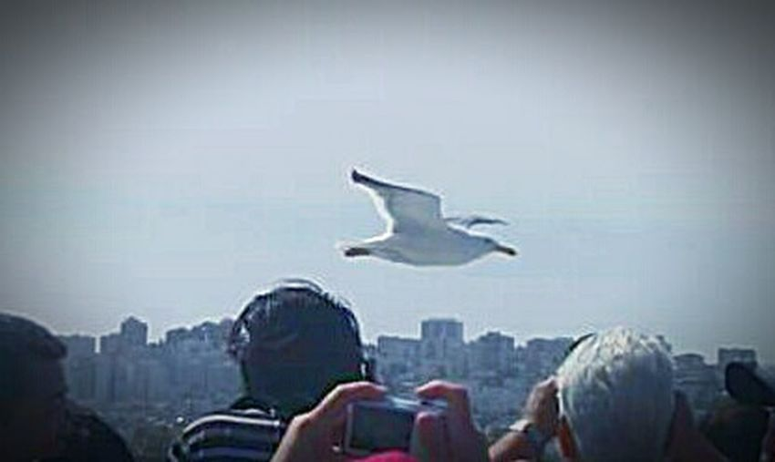 Birds Of EyeEm  Street Photography Taking Photos Seagull My Photography My Point Of View Check This Out Buildings And Sky Tourist Attraction  San Francisco Bay Tourist Destination San Francisco Seagulls Flying Over Me Seagulls In Flight Buildings People Taking Photos Tourists This Week On Eyeem