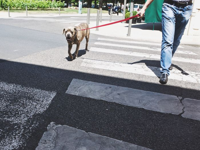 View of man walking with his dog