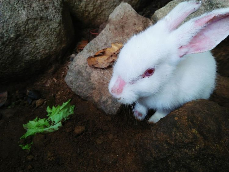 Pets Domestic Animals One Animal Animal Themes Animal Mammal Cute Portrait Domestic Cat No People Looking At Camera Indoors  Close-up Nature Day Pet Life  Lovely Rabbit Faces Cute Rabbit ,bunny Rabbit Face Rabbit Portrait Animals In The Wild Zoo Animals  Outdoors Nature