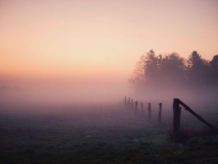 Foggy Morning Sunrise Fog Sky Plant Sunset Scenics - Nature Tranquil Scene Nature
