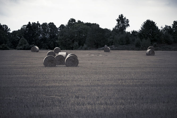 Hay bales on field against sky Agriculture Bale  Hay Rural Scene Farm Field Nature Harvesting Summer Outdoors Straw Landscape Rolled Up Crop  Meadow Landscaped Non-urban Scene Autumn Season  Scenics Plant Tree Sky Land Environment Tranquil Scene Tranquility Grass Scenics - Nature No People Beauty In Nature British Culture My Best Photo
