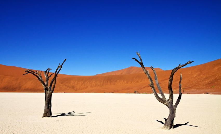 Two dry trees against sand dunes in namibia