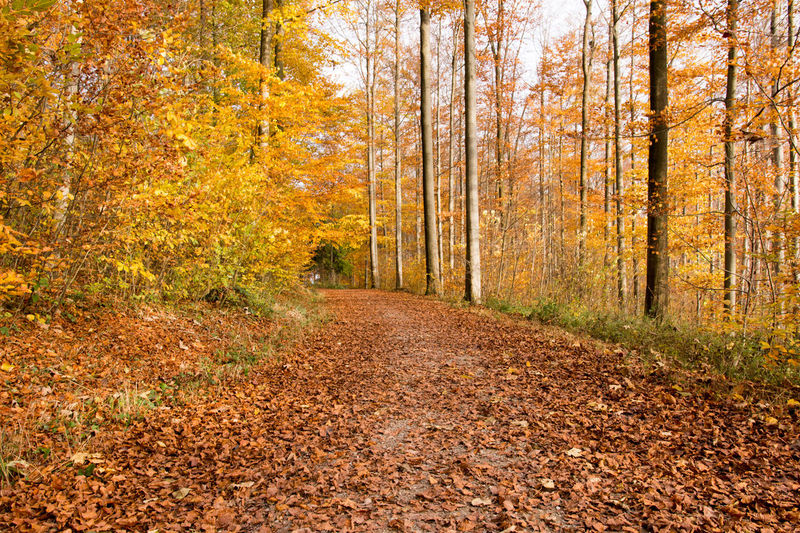 Forest Autumn Beauty In Nature Change Day Dirt Road Forest Growth Landscape Leaf Nature No People Non-urban Scene Outdoors Scenics Sunlight The Way Forward Tranquil Scene Tranquility Tree WoodLand
