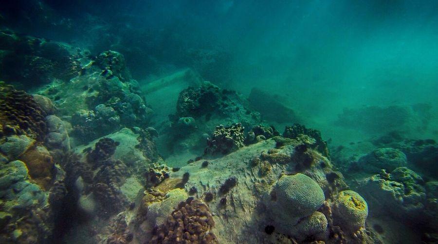 Underwater reef in Jumeirah, Dubai Nature Sea Rocks Water
