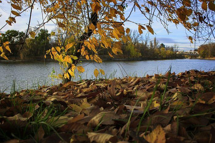 Toamnă🍁 Bucureşti Bucharest Park Herastrau Park Relaxing Autumn Lake Leafs Autumn Colors Sunny Day Sunday Weekend