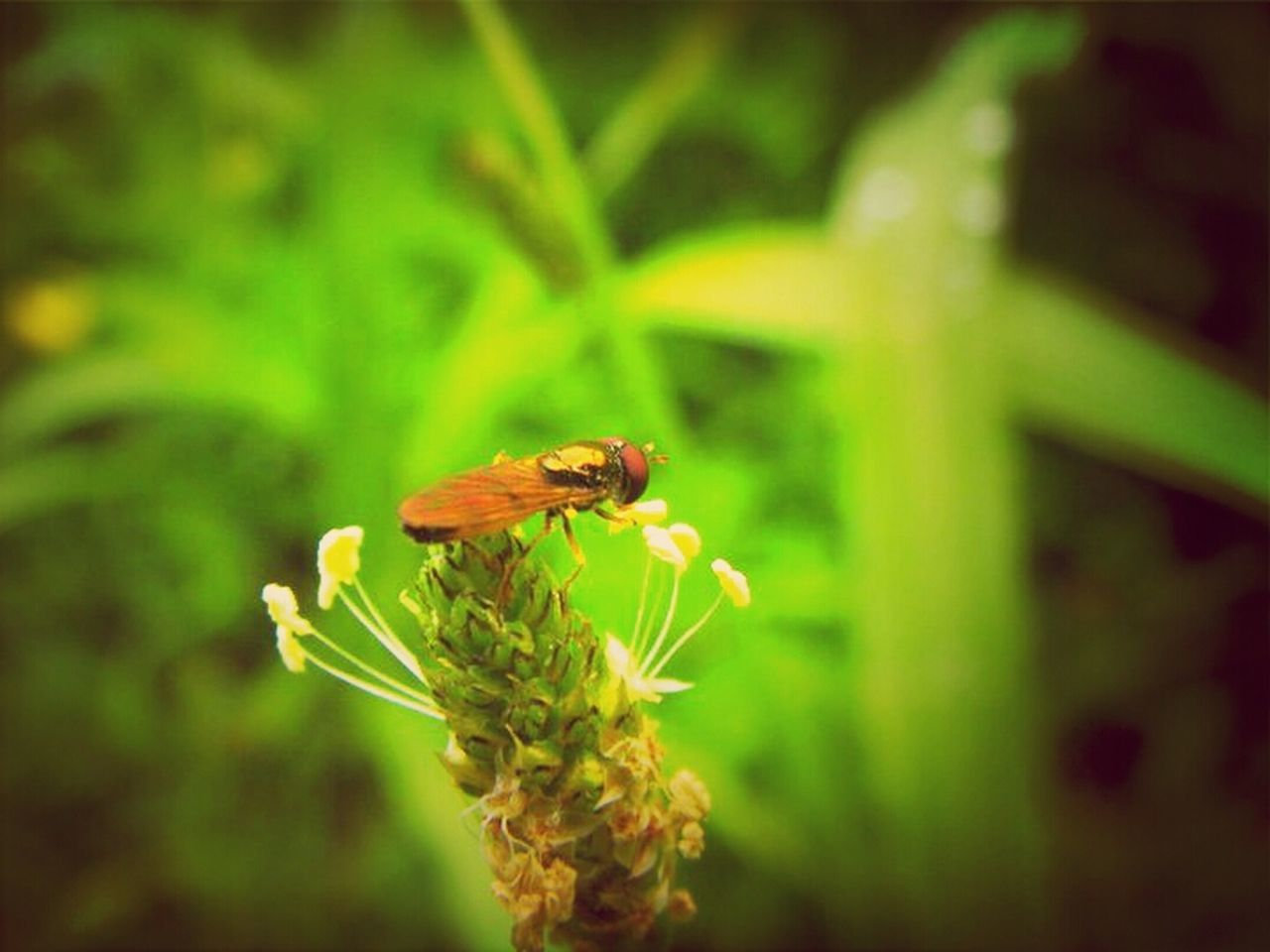 insect, animal themes, animals in the wild, one animal, plant, flower, nature, growth, wildlife, green color, no people, fragility, beauty in nature, animal wildlife, outdoors, close-up, day, bee, pollination, flower head, yellow, freshness