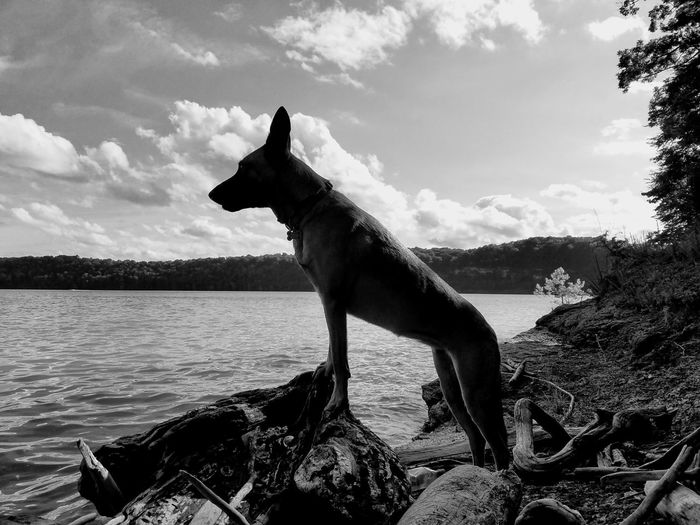 Dog standing in sea against sky