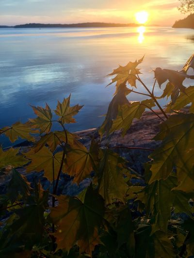 Leaf Beauty In Nature Tranquility Tranquil Scene Nature Water Scenics Sunset Sun Outdoors Plant Sunlight Lake Stockholm, Sweden Spring 2017 Tree