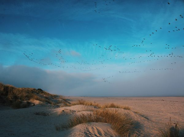 Morning Time on Nairn beach, Moray. Grey lag geese passing by. Sky Nature Scenics Tranquility Blue Beauty In Nature Cloud - Sky No People Tranquil Scene Water Landscape Day Outdoors First Eyeem Photo Wallpaper For Computer Birds In Flight Birds