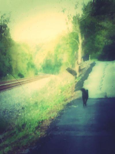 Lonely Road <3 Sairubers Art Beauty Dog Dog❤ Pets Walking Road Nature Beautiful World
