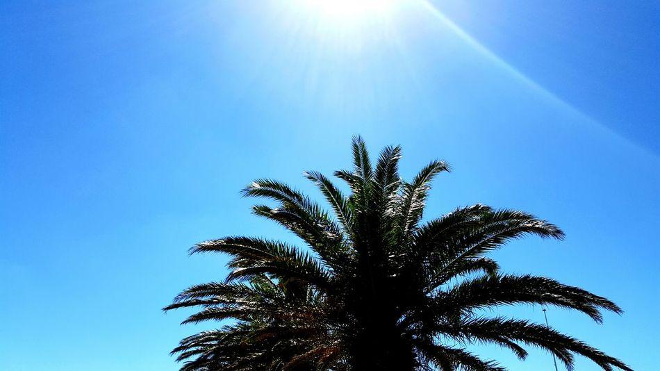 Palm Tree Palmiers 🌴👣 Palmier  Arbre Sky Sud CanetEnRoussillon Canet En Roussillon Canet-plage Blue Bleu Blue Sky Soleil Light Beauty In Nature Nature Clear Sky EyeEmNewHere