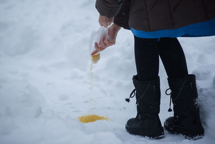 Low Section Of Person Pouring Seeds On Snow During Winter