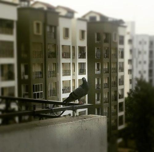 Bird and Building. Eyebird Eyebuilding Eyeshot
