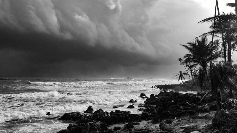 Caribbean Life Puerto Rico While Running Traning Running Morning Light Morning Sun Storm Brewing Enjoying Life Black & White Sea Tree Nature Cloud - Sky Water Horizon Over Water Outdoors Beauty In Nature Storm Cloud Scenics Beach