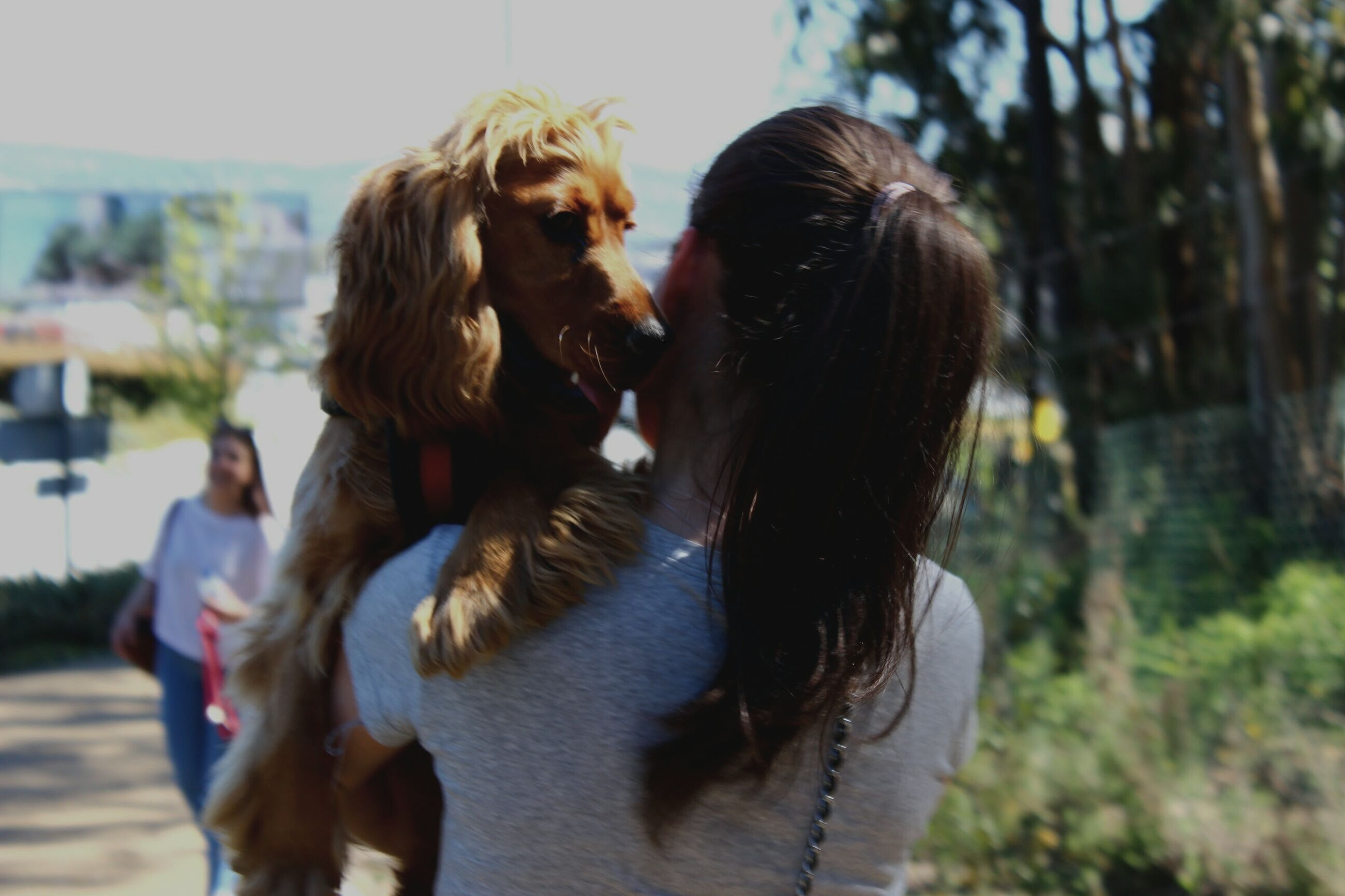 domestic animals, focus on foreground, mammal, lifestyles, leisure activity, long hair, outdoors, day, close-up, animal hair, selective focus, nature, casual clothing, sky