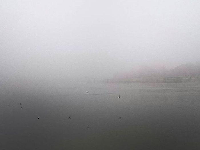 Danube Novisad Fog Foggymorning VSCO Vscocam Vscolove Vsconature Vscoedit Vscoaddict Rising_masters Igers Bestoftheday Photoofday Sonyz3 Z3