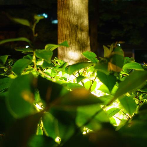 Close-up of fresh green plant at night