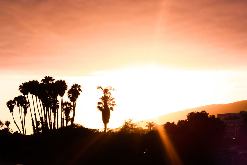 California Sunset_collection Beauty In Nature Day Growth Landscape Nature No People Outdoors Palm Tree Scenics Silhouette Sky Sun Sunlight Sunset Tranquil Scene Tranquility Tree Palm Tree Sunset LA Sunset Relaxing Perspectives On Nature