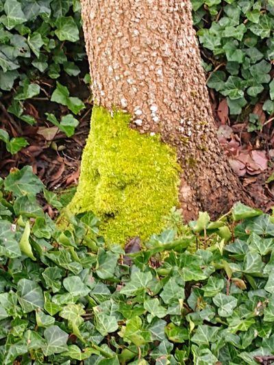 watcher Tree