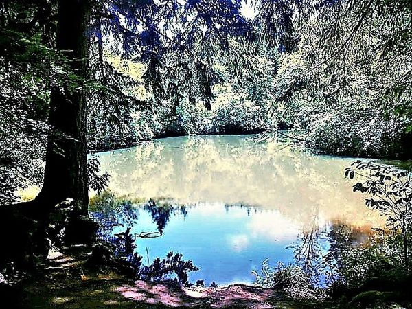 Beauty In Nature Forest Growth Nature Outdoors Reflection Sky Tranquil Scene Tranquility Tree Water