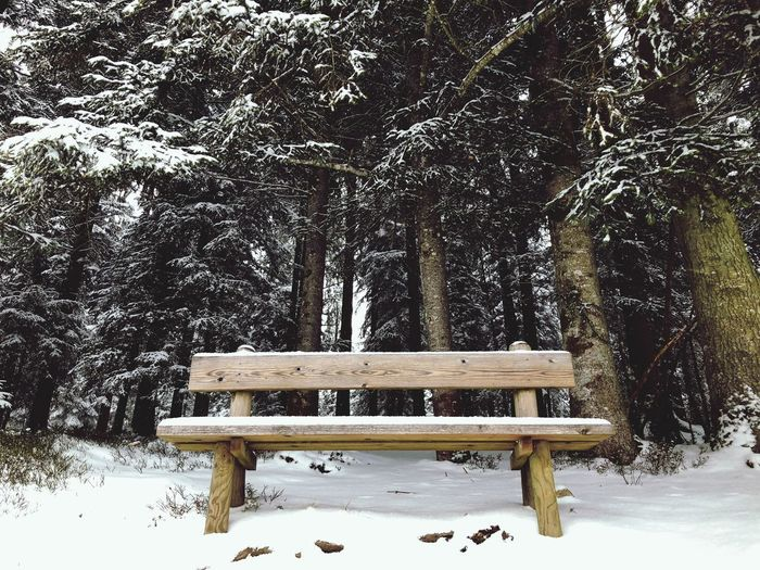 Lonely bench Snow Tree Winter Cold Temperature Nature Tree Trunk Wood - Material Weather Beauty In Nature Outdoors No People Seat Branch EyeEmNewHere
