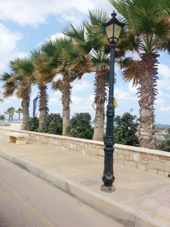 Palm Tree Tree Sky Day Outdoors Beach No People Crete Greece Day Happy Fresh Holydays Vacation Summer