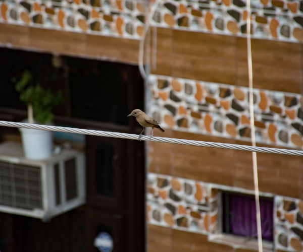 Low angle view of bird perching on wood against building