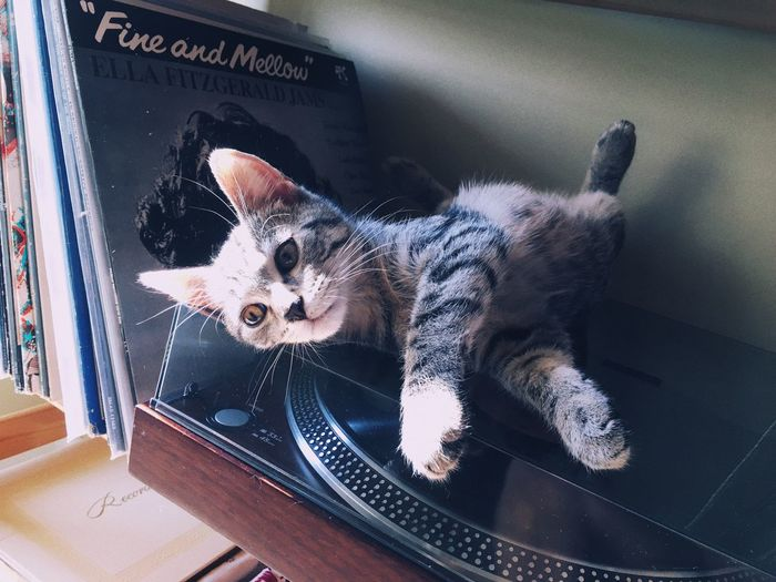 Music Forsale Buy #buymyphotos Postcard Pets Domestic One Animal Animal Themes Animal Domestic Animals Mammal Cat Vertebrate Domestic Cat Feline Indoors  No People Window Text Relaxation Home Interior Full Length Whisker Sitting