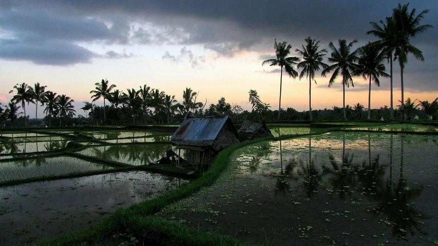 Bali - Ubud in the past Bali Ubud Ricefields Bali 16:9 Verybalitrip Very Bali Trip