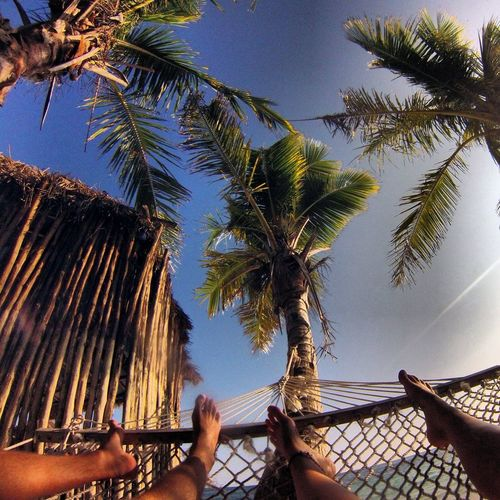 Adult Beach Chill Clear Sky Day Fiji Hammock Leisure Activity Lifestyles Men Nature Outdoors Palm Palm Tree Real People Relax Sea Sky Tree Tree Trunk Water Women