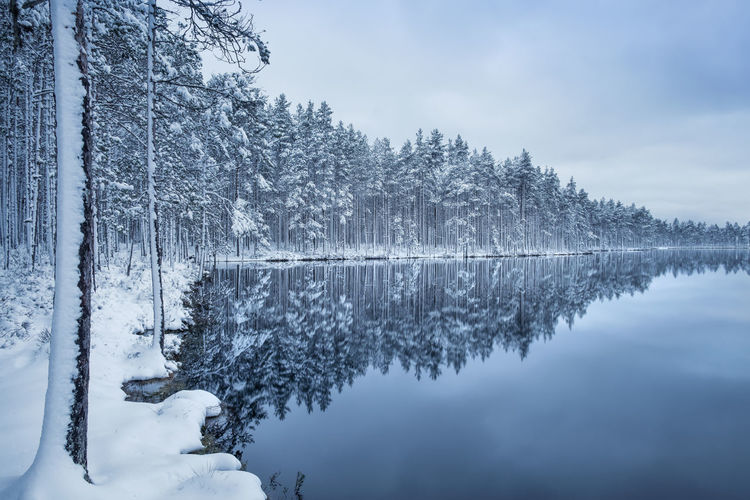 Scenic landscape with lake reflection and snow at winter evening Finland Light Moment Of Silence Winter Wintertime Beauty In Nature Blue Cold Temperature Evening Forest Frozen Lake Landscape Nature No People Outdoors Peaceful Reflection Scenics Snow Tranquil Scene Tranquility Tree Water Winter Perspectives On Nature