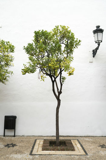 Marbella MarbellaOldTown Old Town SPAIN Architecture Spanish Architecture Holiday Destination Vibrant Color Tree Plant Street Nature Street Light Lighting Equipment No People Day Growth Outdoors Built Structure Building Exterior Footpath City Beauty In Nature Field Electric Lamp