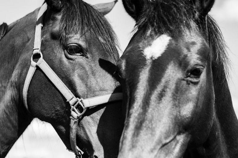 Feelings Horse
