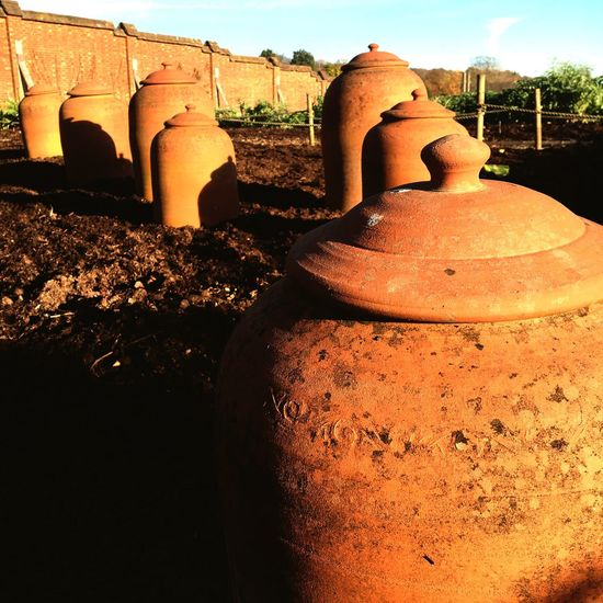 Terracotta rhubarb forcers in a kitchen garden in November Clay Earthenware No People Outdoors Sunlight Day Close-up Terracotta Rhubarb Pots Rhubarb Forcer
