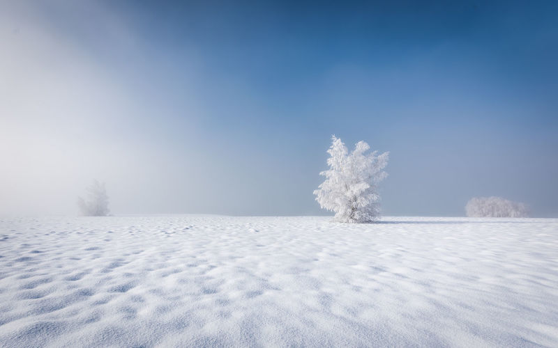 Frozen trees on snow covered field against blue sky