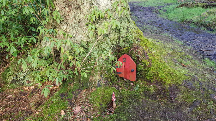 Fairy Door Tree Fairy Door High Angle View Field Grass