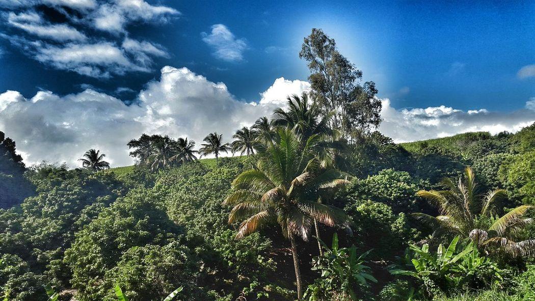 Landscape Beautiful Nature Ile De La Reunion, Une Beauté, Un Paradis, Mon Ile <3 Reunion Island Magnifique Ile De La Reunion Opent Edit Like The Adventure Handbook Tropical Paradise On Top Of The World Payasage love the island ❤👌✊✊