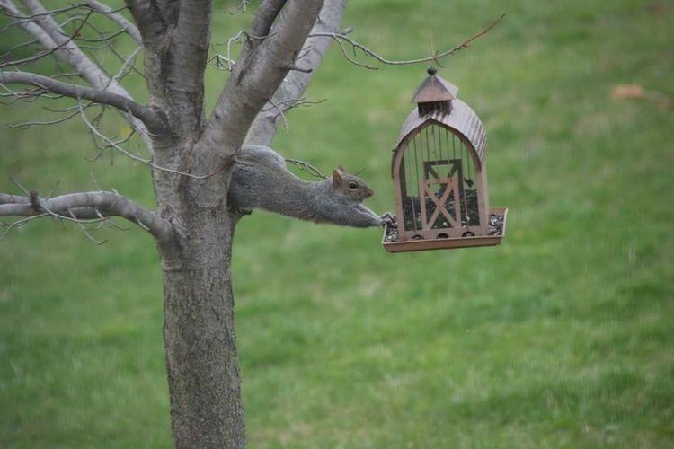 View of bird perching on tree