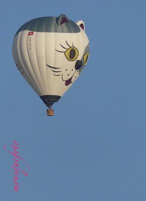 ...selbiger mit 600er Tele mal rangeholt. Lumixfz300 Ohne Bearbeitung Hot Air Balloon Hochrhein Ballonfahrt Südschwarzwald Ballons In The Sky