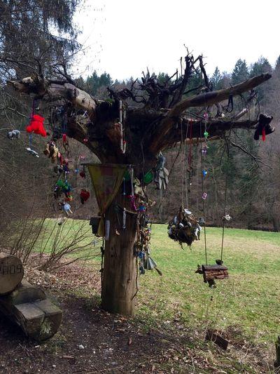 Wunschbaum Wood Wünschdirwas Wishes A Walk In The Woods Relaxing EyeEm Nature Lover Inlovewiththeworld Nature 😚