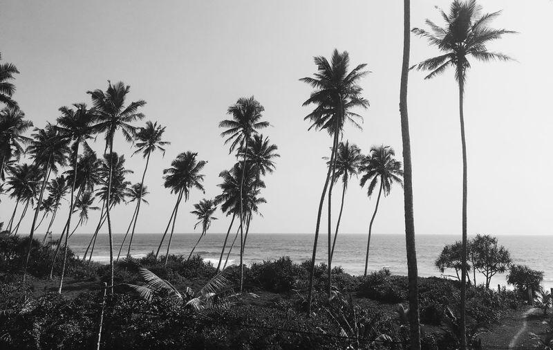 Beach Palmtree