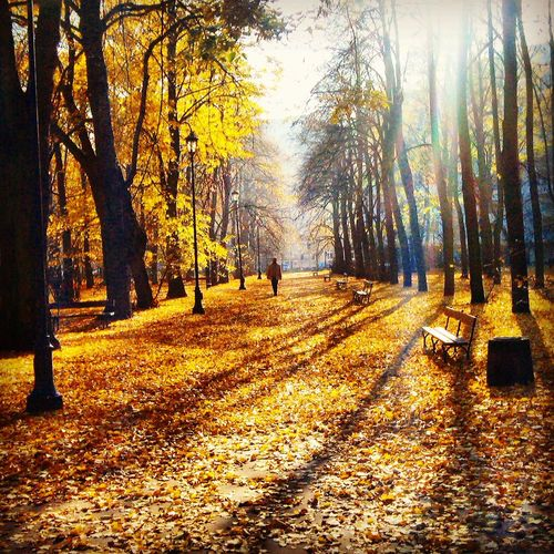 Photo Around You Popular Photos Eyeem Best Photo Autumn Colors