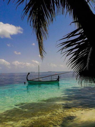 Maldives Maldives Islands Beautiful Surroundings Holiday Dhoni Water Reflections Palm Trees Natural Beauty! Vilamenhoo Island, Maldives Sea Water Transportation Beach Beauty In Nature Scenics Nature Nautical Vessel Horizon Over Water Sky Palm Tree Outdoors No People Sand