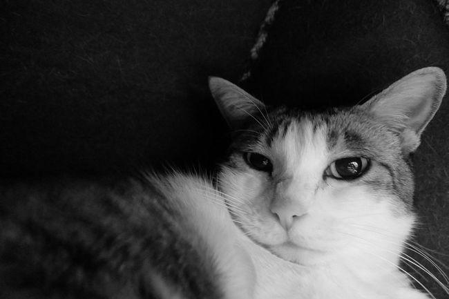 ホッカペとにゃんこハウスは最高の組み合わせにゃ😆 EyeEm Best Shots KAWAII Cat ねこ Mycat Playing With The Animals Fujifilm XQ1