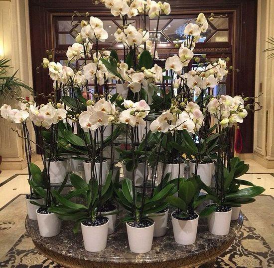 Uma belo arranjo de flores ❤️ Flowers Paris ❤ Portrait Bouillabaisse Hello World (null) Artist Walk This Way View Planting