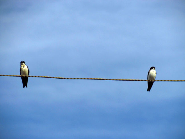 Animal Animal Themes Animals In The Wild Bird Birds Birds_collection Low Angle View Mid-air Mirror Effect Mirrored Mirrorless Perched Perched Bird Perching Sky Spread Wings Two Animals Two Birds Wildlife Wire Wires In The Sky Zoology