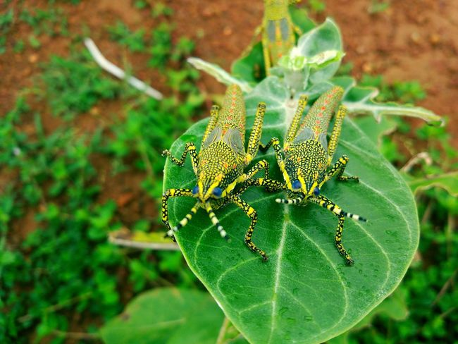 Uncle Aunty. Colour Of Life Wildlife Wildlife & Nature Wildlife Photography Nature Insect Vibrant Colors Monsoon Wildlife And Nature Wild Wildlifephotography Colours Of Nature Colors Of Autumn Nature's Diversities