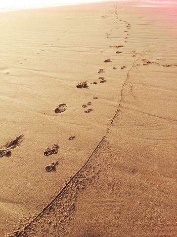 Footprints Mananddog