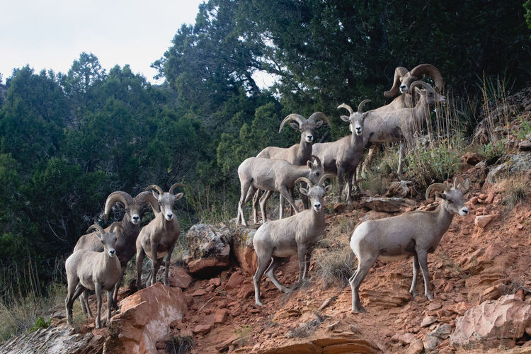 Zion National Park Animal Themes Animal Wildlife Animals In The Wild Large Group Of Animals Mammal Nature Outdoors Togetherness Tree